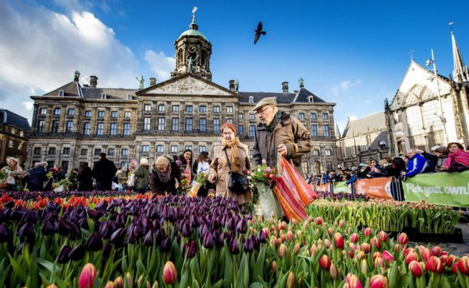 National Tulip Day! Did you know that you can pick a beautiful bouquet of tulips for free at Amsterdam's Dam Square on Saturday 20 January 2018?