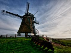 Windmill 'The North' in Oosterend (Texel)