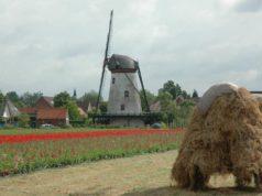 Windmill 'De Korenbloem' in Scherpenisse (Zeeland)