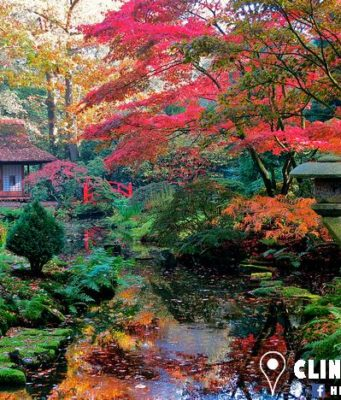 Did you know that given its extreme fragility, the magnificent Japanese Garden in The Hague is only open a few weeks in spring and autumn? The crown jewel of the Clingendael estate can be visited this autumn from 14 to 29 October 10.00-16.00. Free entrance!