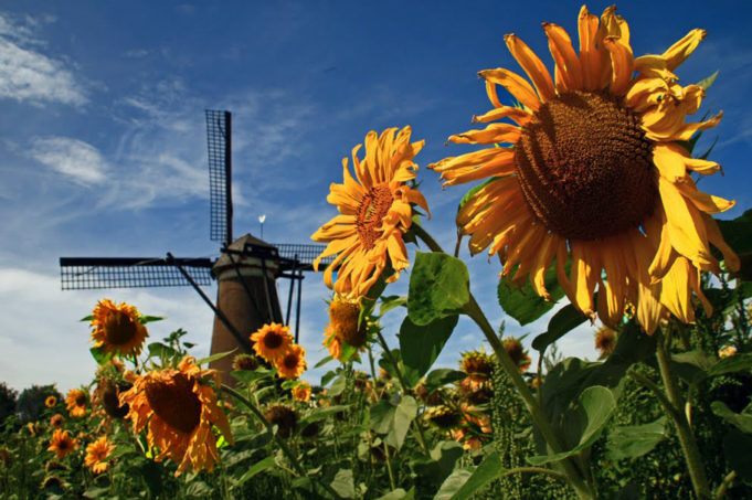 Did you know that Vincent van Gogh made as many as seven sketches of the Roosdonck windmill (built in 1884) in Nuenen while he lived there from 1883 to 1885? However, he refused to paint this windmill as he simply disliked new buildings.