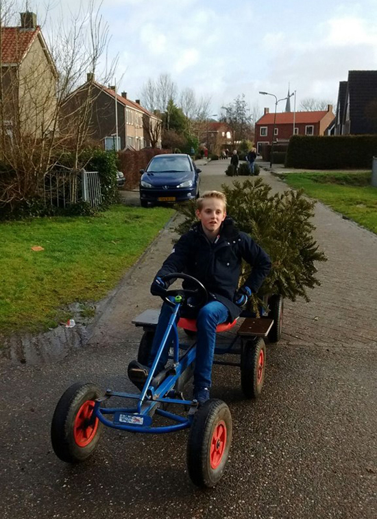 Did you know that kids in the Netherlands can earn some extra pocket-money by collecting Christmas trees?