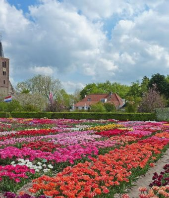 The Hortus Bulborum is the only bulb garden in the world with more than 4,000 different varieties of tulips, hyacinths, daffodils and other colorful spring flowers. Every spring the outdoor garden of Hortus Bulborum is a feast for the eyes and a pleasure for the nose.