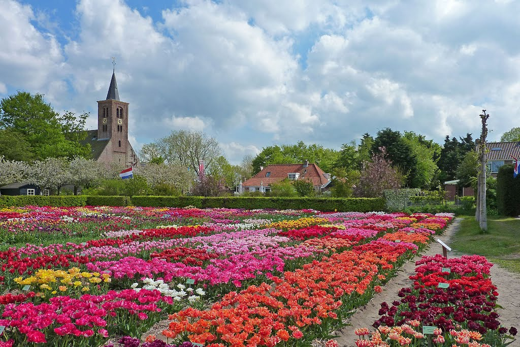 Hortus bulborum unique spring flower garden heavenly holland the oldest species of tulips in hortus bulborum mightylinksfo