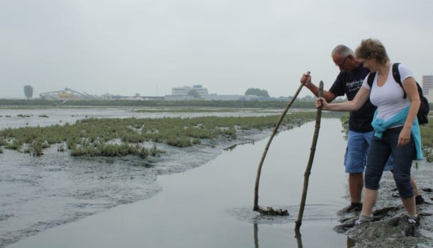Did you know that the Wadden Islands are not the only place in the Netherlands where you can go mudflat walking? The Sophia Polder is a relatively new nature reserve near Dordrecht in South Holland. At low tide the polder is dry and is perfect for rugged mudflat hiking trips.
